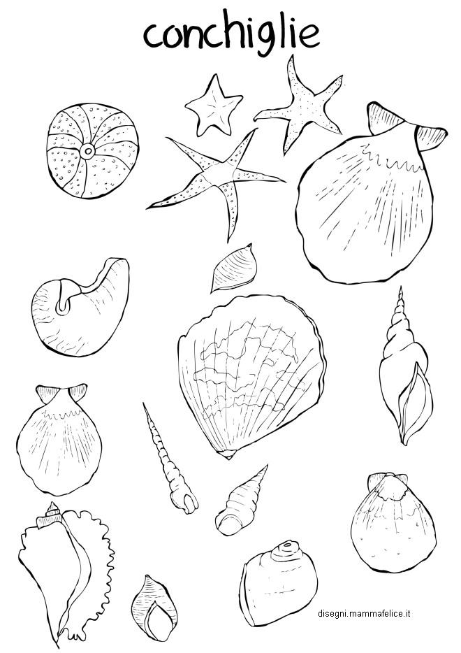 Disegno da colorare per il mare le conchiglie disegni for Disegni di mare da colorare