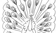 Disegni degli animali: il pavone