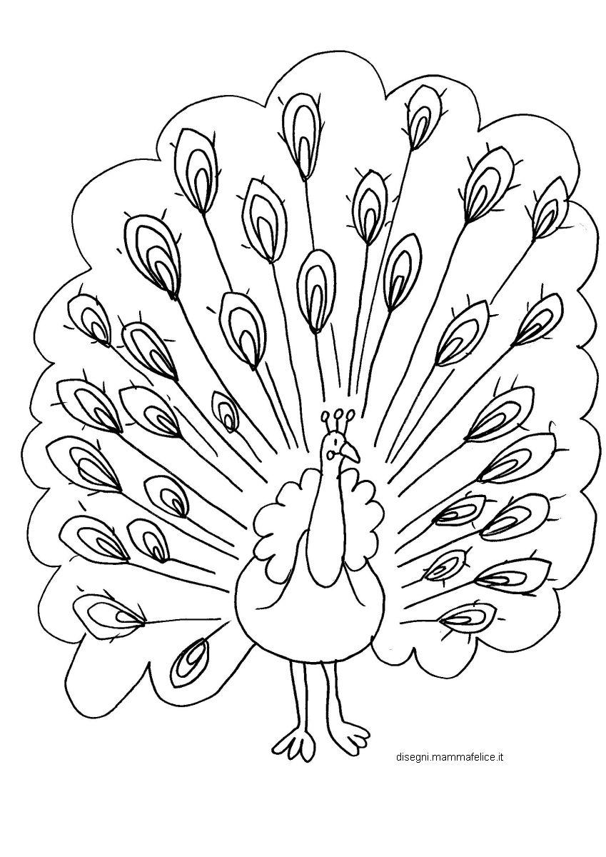 disegno-da-colorare-il-pavone